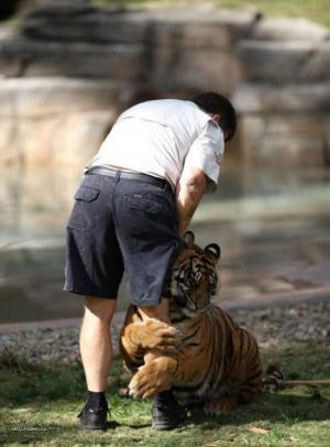 Tiger Gives Hug