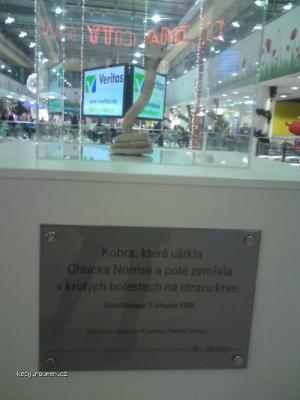 KobraFloraChuck