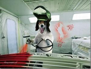 Dog service4
