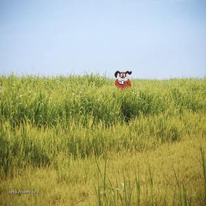 real duck hunt