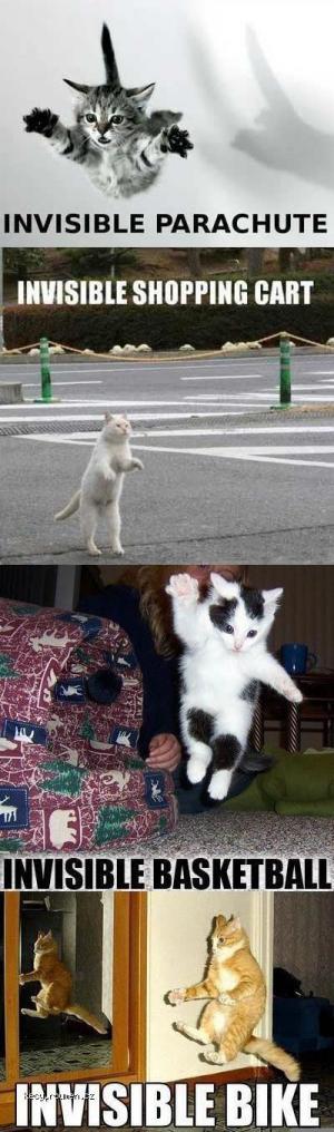 invisible cat 1
