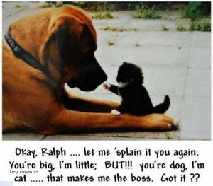 X Okay Ralph