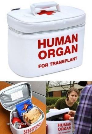 Human organ box