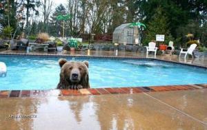 pojd si zaplavat