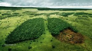 Zelene pluca