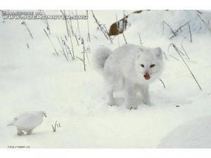 Zima07