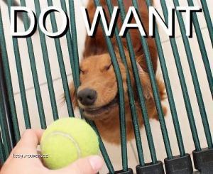 dowanttennisball
