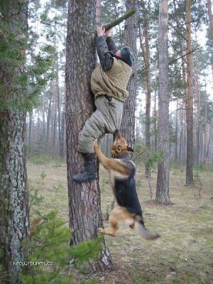 lovec a jeho  pes