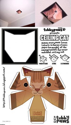 ceiling cat paper
