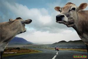ty kravo neco jede