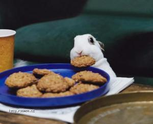 easterbunny eating  cookies