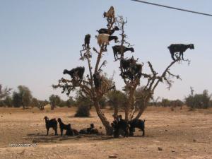 jak rostou kozy