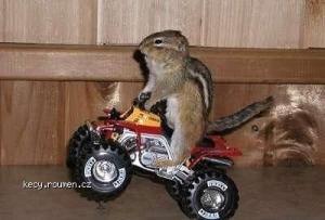 Squirrel riding