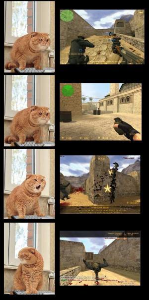 reaction cat