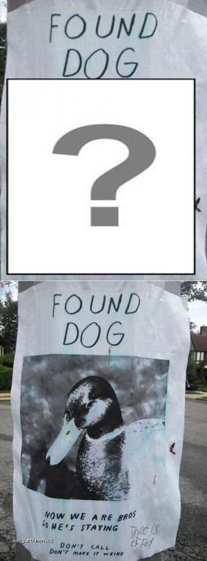 X Found Dog