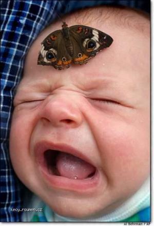 motylem do hlavy
