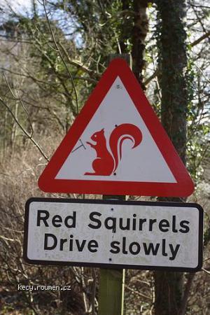 pomaly veverky