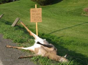 free pet deer