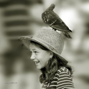 hledam dum holubi