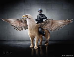 jizdni policie