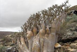 Socotra Island 07