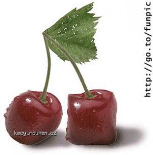 ovoce2