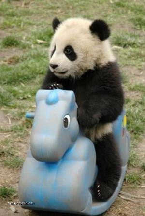 panda on horse