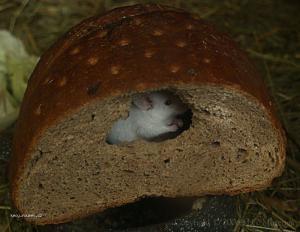 v chlebu domecek