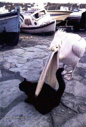 bird eats cat