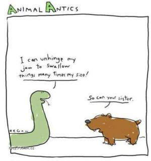 Animal antics