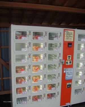 automat na prodej vajec