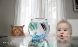 rybicka