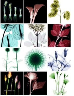 Charming XRays of Flowers