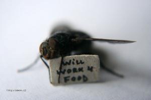 usilovna moucha