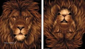 lev nebo kralik