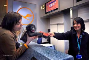 letenka pro opici