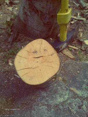 forever a log