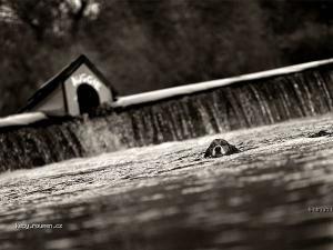 prisla velka voda