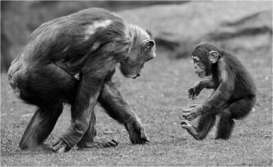 ked sa povie ze mam opicu