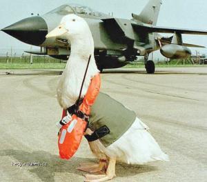 Air Force Response To Navy Seals