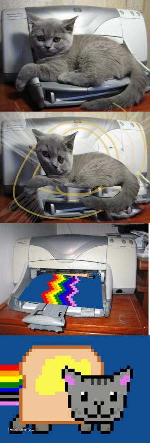 cat and printer videjnik first