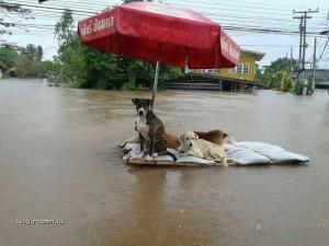 X Sailing Soi Dogs