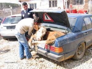 Only in Kosovo 03b