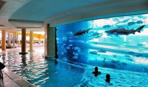 Shark tank pool in Las Vegas
