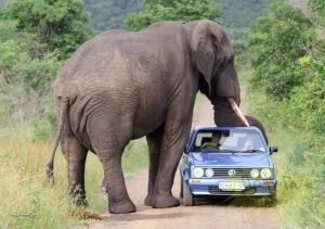 konec jednoho VW