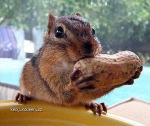 squirreleatinganut1
