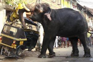 vzteklej slon