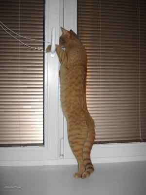 long cat real no fotoshop