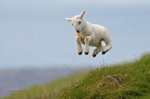 levitujici ovecka