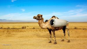 jet camel